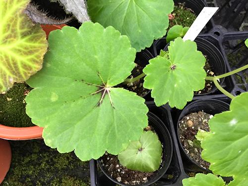 uniflora/ウニフローラ
